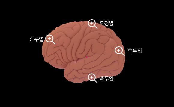 뇌탐험 기간제한 apk screenshot