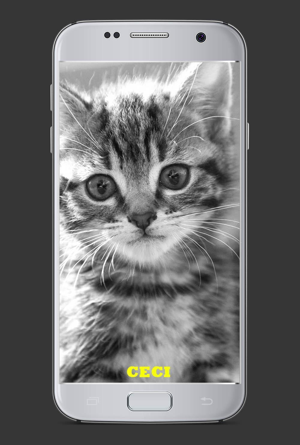 1001 Nama Kucing Kesayangan For Android Apk Download