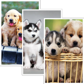 Puppies HD Wallpaper Pro icon