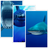 Sharks HD Wallpaper Pro icon