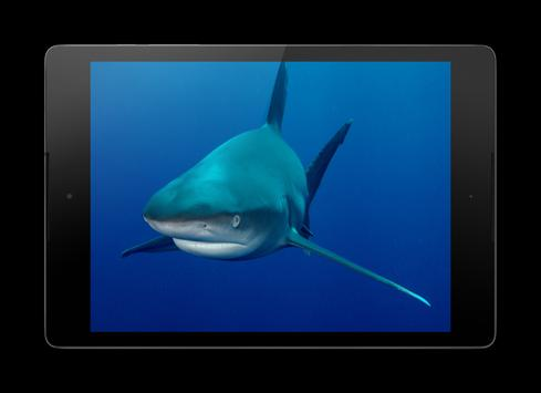Sharks HD Wallpaper Pro apk screenshot