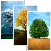Trees HD Wallpaper Pro icon