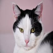 Кошки [Cats] icon