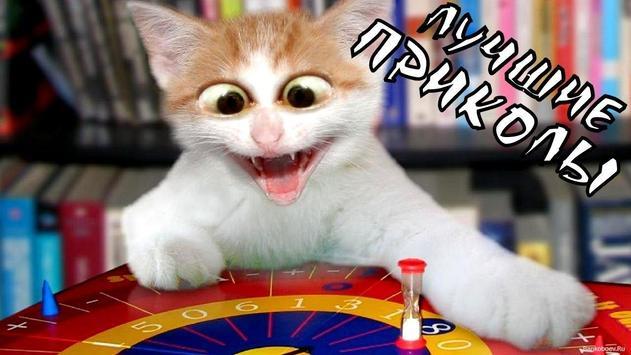 Кошки [Cats] poster