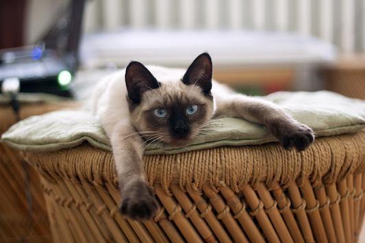 Кошки [Cats] screenshot 2