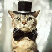 LOL Cats 2 icon