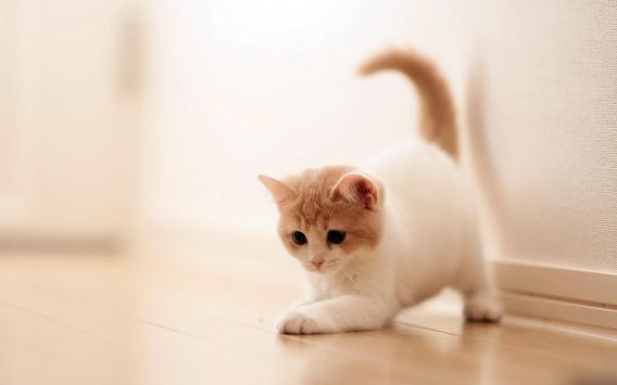 القطط apk screenshot
