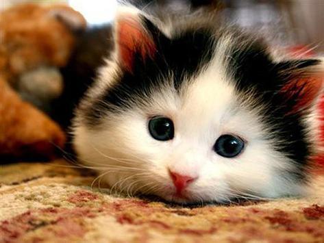 القطط poster