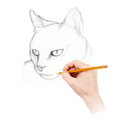 How To Draw Warrior Cats
