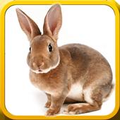 Pet Bunny Rabbit 3d Simulator icon