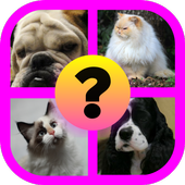 Guess the Animal: Cat or Dog? icon