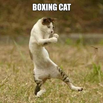 Смешные коты скачать приколы мои видео приколы youtube.