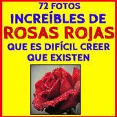 Fondos de Rosas Rojas icon