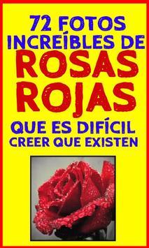 Fondos de Rosas Rojas poster