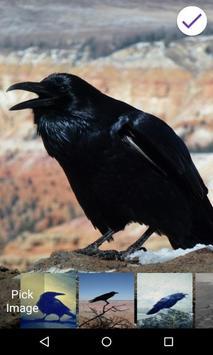 Black Raven Lock Screen screenshot 5
