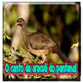 O Canto Da Aracua Do Pantanal icon