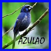O canto de Azulao icon