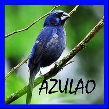 O canto de Azulao poster