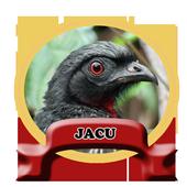 O Canto de Jacu Novo icon