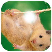 Cute Mouse Photo Frame icon