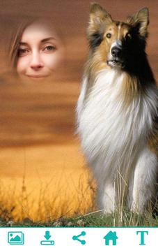 Collie Photo Frame poster