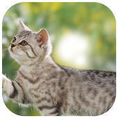 Cute Cat Photoc Frame icon