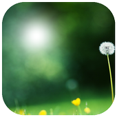 Green Grass Photo Frame icon