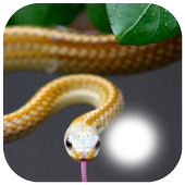 Snake Photo Frame icon