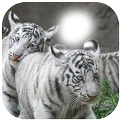 White Tiger Photo Frame icon