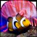 Pescado de Mar Fondos Animados 🐠 Acuario 3D