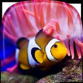 Ocean Fish Live Wallpaper 🐠 Animated Aquarium icon