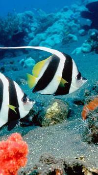 Ocean Fish Live Wallpaper screenshot 1