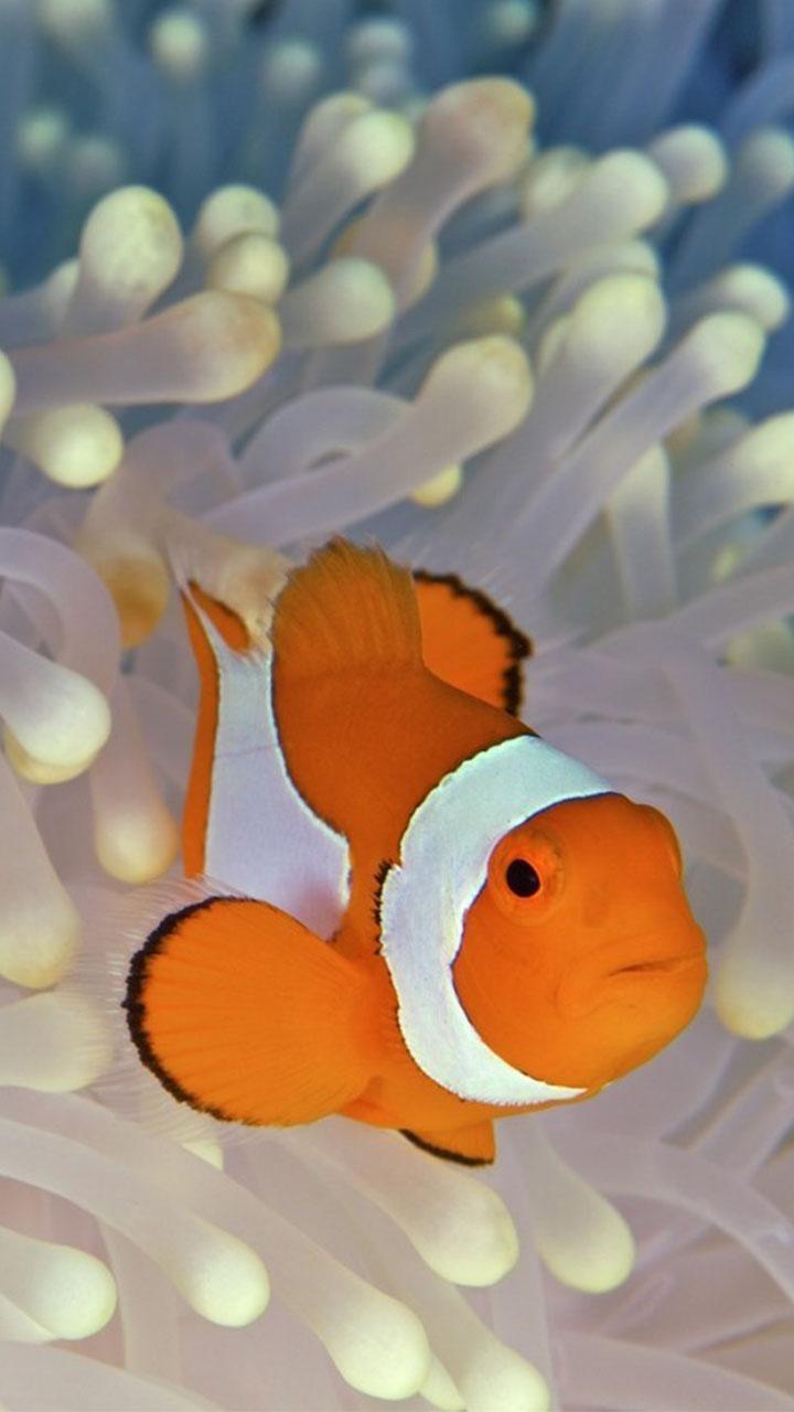 Юрочка, картинки рыбки анимации