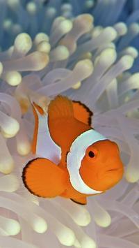 Ocean Fish Live Wallpaper screenshot 2