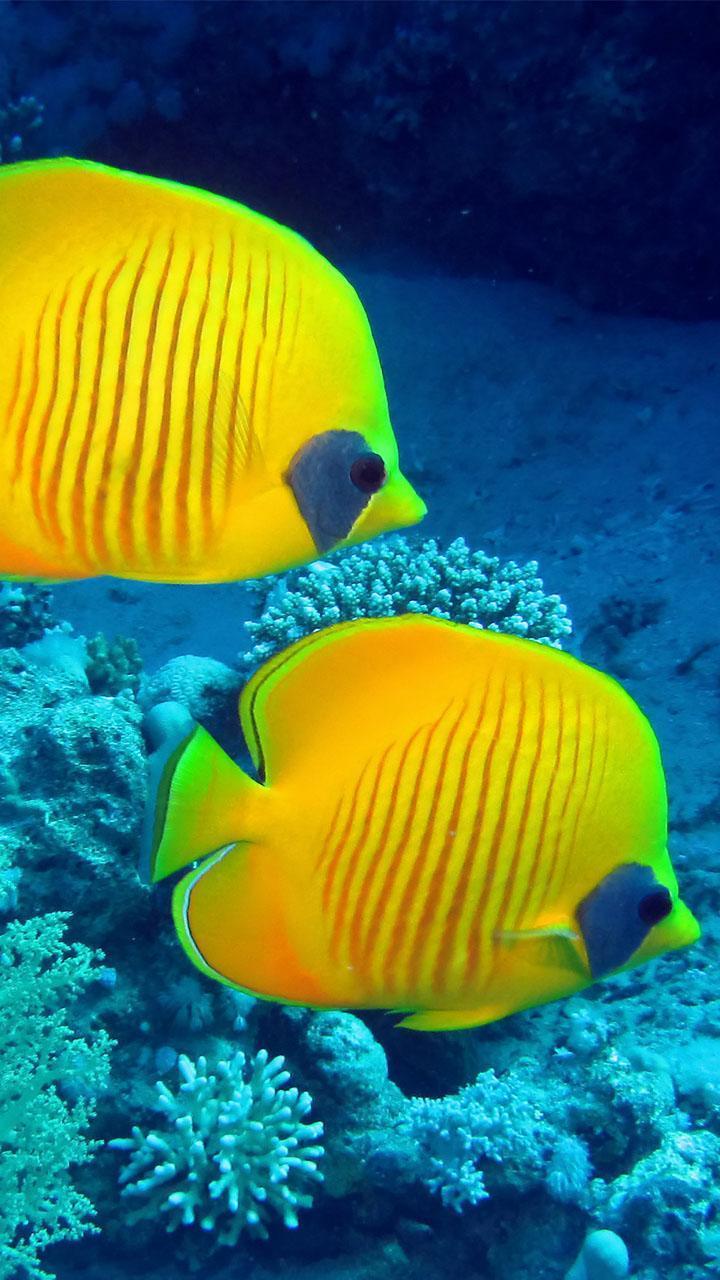 37++ Animasi hewan laut bergerak terupdate