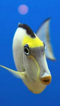 Ocean Fish Live Wallpaper 🐠 Animated Aquarium apk screenshot