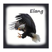 85 Gambar Burung Elang Png Gratis Terbaru