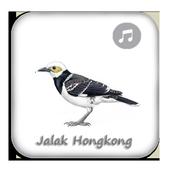 Kicau Jalak Hongkong Gacor Top icon