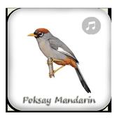 Kicau Poksay Mandarin Gacor icon