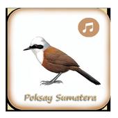Kicau Poksay Sumatera Gacor icon