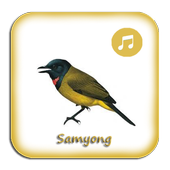 Kicau Samyong Gacor Prestasi icon