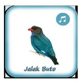 Kicau Tengkek Buto Gacor Pikat icon