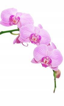 Orchids HD Live Wallpaper screenshot 3