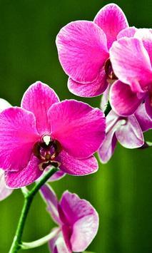 Orchids HD Live Wallpaper screenshot 2