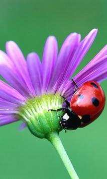 Ladybug HD Live Wallpaper poster