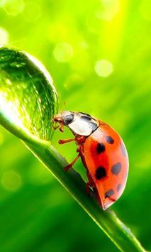 Ladybug HD Live Wallpaper screenshot 1