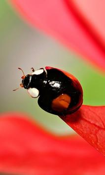 Ladybug HD Live Wallpaper screenshot 2