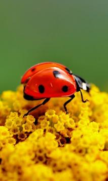 Ladybug HD Live Wallpaper screenshot 4