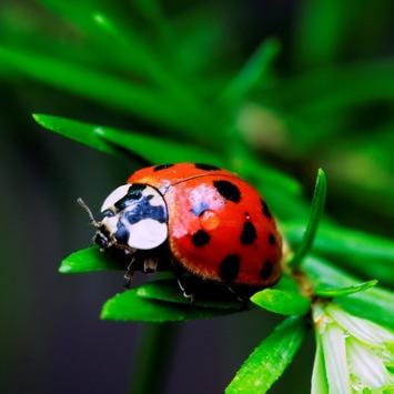 Ladybug HD Live Wallpaper screenshot 5