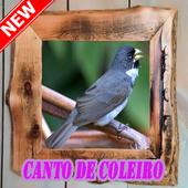 Cantos De Coleiro 2018 New icon